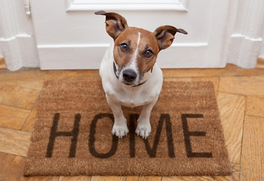 The trials and tribulations of renting with pets