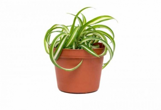 8 condo-friendly plants – green thumb not required!